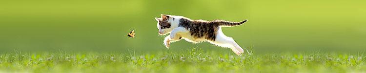 Für Katzen