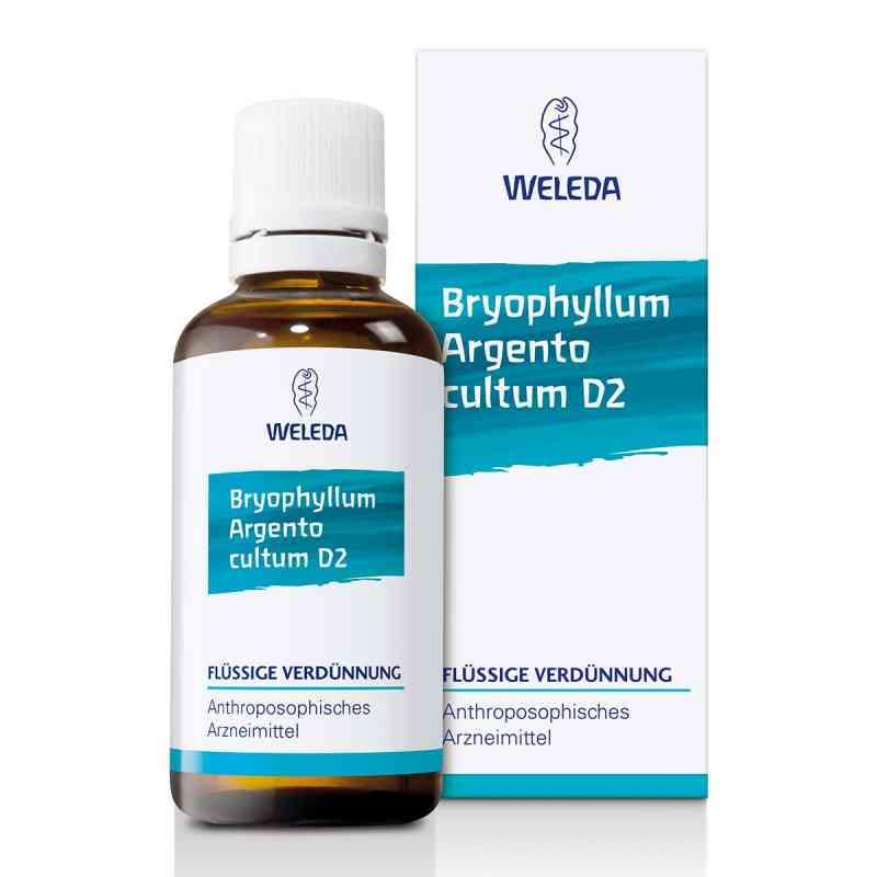 Bryophyllum Argento Cultum Dilution D2  bei juvalis.de bestellen