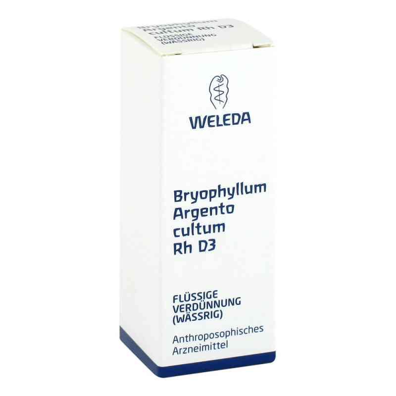 Bryophyllum Argento Cultum Rh D3 Dilution  bei juvalis.de bestellen