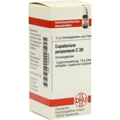 Eupatorium Purpureum C 30 Globuli  bei juvalis.de bestellen