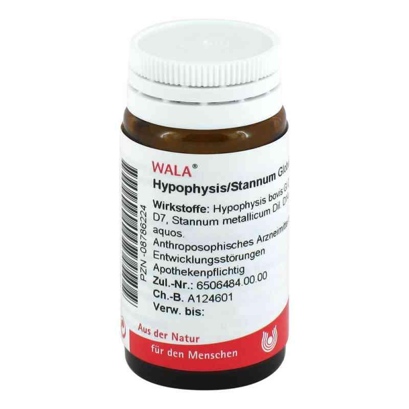 Hypophysis/stannum Globuli  bei juvalis.de bestellen