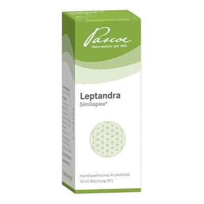 Leptandra Similiaplex  bei juvalis.de bestellen