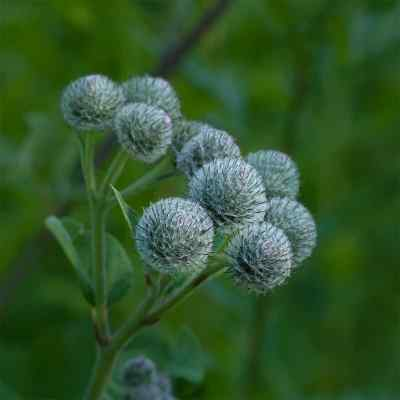 Rausch Haartinktur Spezial  bei juvalis.de bestellen