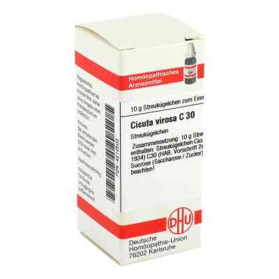 Cicuta Virosa C 30 Globuli  bei juvalis.de bestellen