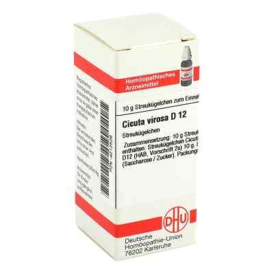 Cicuta Virosa D 12 Globuli  bei juvalis.de bestellen