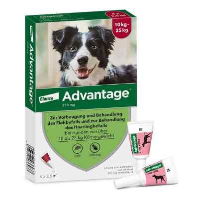 Advantage 250 für Hunde Lösung  bei juvalis.de bestellen