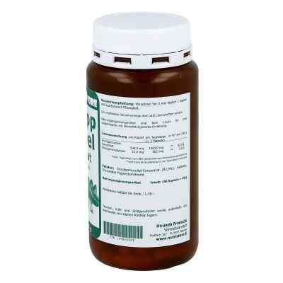 Grünlipp Muschel 500 mg Konzentrat Kapseln  bei juvalis.de bestellen