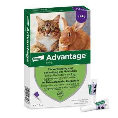 Advantage 80 mg für gr.Katzen und gr.Zierkaninchen  bei juvalis.de bestellen